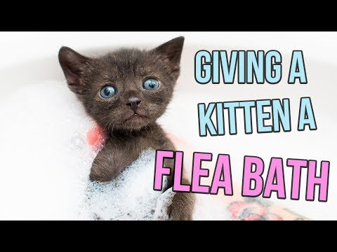 How to Give a Kitten a Flea Bath