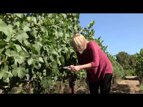 Vantreo Inman Family Wines