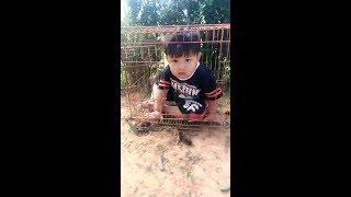 Video Viral alahai budak ni boleh pulak duduk dalam sangkar comel je MP3, 3GP, MP4, WEBM, AVI, FLV Agustus 2018
