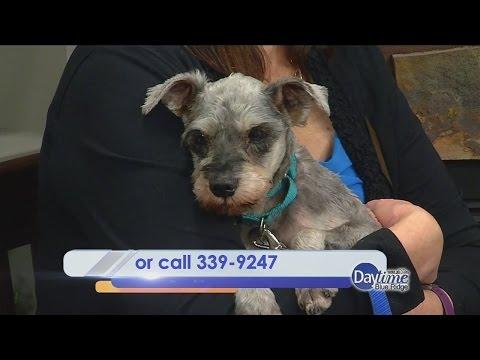Roanoke Valley SPCA Pet of the Week