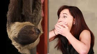 Download Youtube: A Girl Obsessed With Sloths Gets Surprised With A Sloth