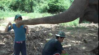 Family Travel Blog-Solai Feeds An Elephant- Elephant World (Kanchanaburi, Thailand)