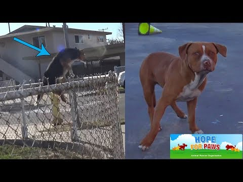 Kids threw rocks at the dog and rescuers... it's time to teach compassion in schools.