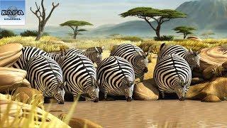 Thế giới động vật muôn màu với bao điều lý thú. Hãy cùng nhau tìm hiểu những điều thú vị về các loài động vật dưới đây nhé. Những Bí Ẩn SIÊU BẤT NGỜ Của Thế ...
