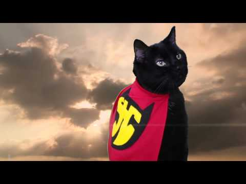 Super Hero Cat Music Video By N2 The Talking Cat