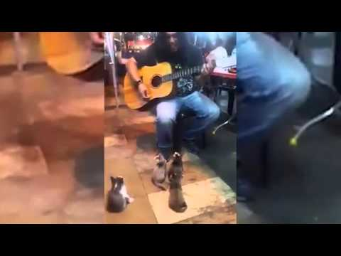Watch these kittens come to enjoy the music from a street performer everyone else ignored!