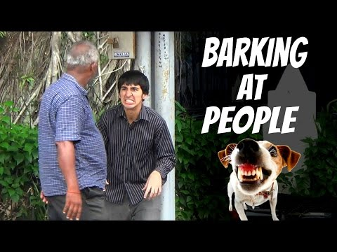 Barking At People - Acting Like Dog In Public Prank