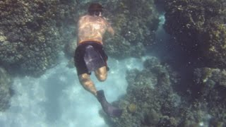 Snorkeling in Kealakekua Bay, Kona, Hawaii