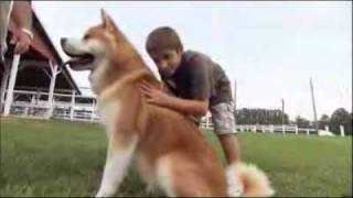 Dog Breeds 101 Video: Akita