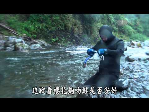 【發現】20140405 - 大甲溪 (видео)