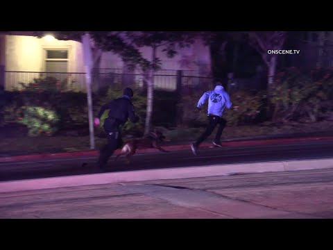K9 Take Down Caught on Camera | La Mesa