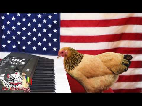 Patriotic Chicken Pianist Performs The StarSpangled