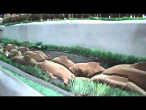 Exposição de escultura em Cezarina