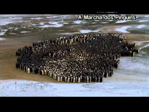 A MARCHA DOS PINGUINS - Trailer