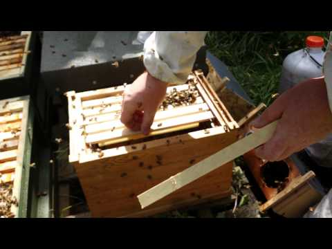 Installing A Package Into A Top Bar Hive