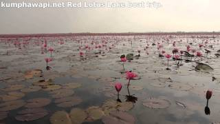 Kumphawapi Thailand  City new picture : Red Lotus lake, Kumphawapi, Thailand. Boat trip