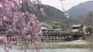 【京都府春だからこそ行きたくなる嵐山】