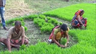 Women in Agriculture | Barisal Bangladesh|