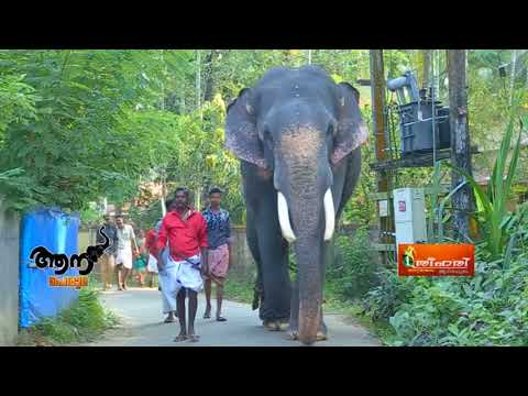 Video Thottakadu Vinayakan  (aana peruma episode  - 36 ) download in MP3, 3GP, MP4, WEBM, AVI, FLV January 2017