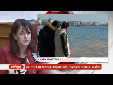 Η Ερυθρά παλίρροια εμφανίστηκε και πάλι στον Θερμαϊκό | 02/04/2019 | ΕΡΤ
