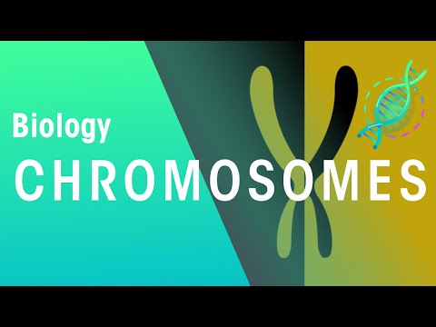 What is Chromosome