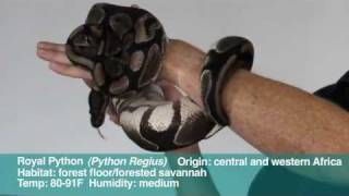 Reptiles: medium sized snakes: intro to handling, anatomy and temperature