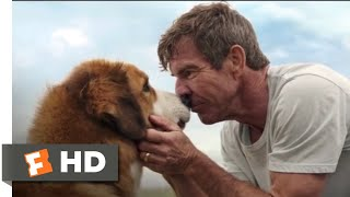 Nonton A Dog S Purpose  2017    Bailey Comes Home Scene  10 10    Movieclips Film Subtitle Indonesia Streaming Movie Download