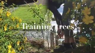 Training trees