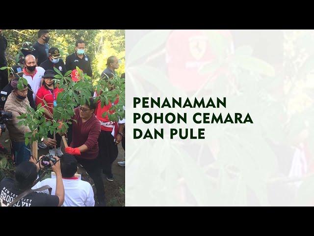 DLHK-BADUNG-NEWS--PENANAMAN-POHON-CEMARA-DAN-PULE.html