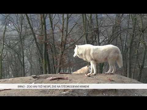 TV Brno 1: 20.12.2017 Zoo ani teď nespí, zve na štědrodenní krmení