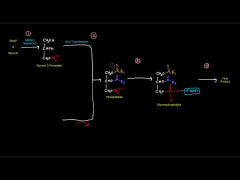 Glycerophospholipid Synthesis (Part 1 of 4) - Introduction