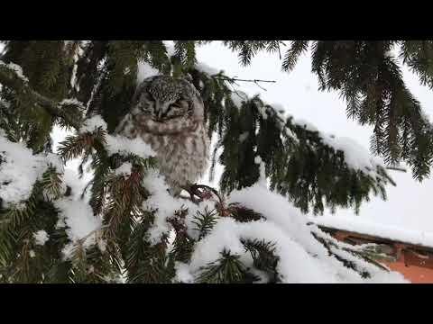 Зимние развлечения Глеба. Алабай катает на снегокате. Каток. Горки.