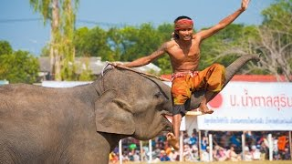 Surin Thailand  City new picture : World's Largest Elephant Festival in Surin Thailand - 4K!