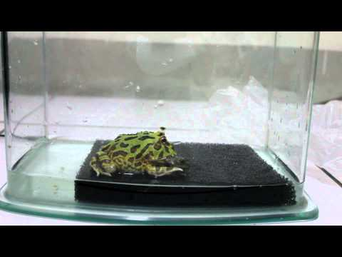 青蛙竟然會互相吃掉對方,這根本就是血腥大屠殺!
