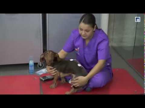 Vetsia promete ser el mejor hospital veterinario de especialidades y un referente europeo