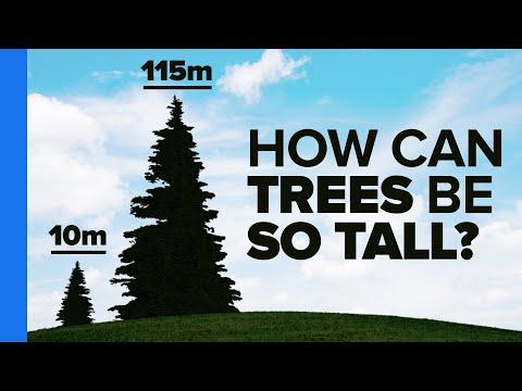 Úžasná fakta o stromech