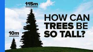 How Trees Bend the Laws of Physics