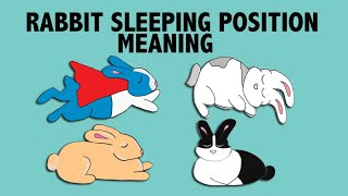 What Your Rabbit's Sleeping Position Reveals about their Personality! by Lennon The Bunny