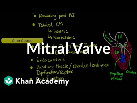 Mitral Valve Regurgitation And Mitral Valve Prolapse