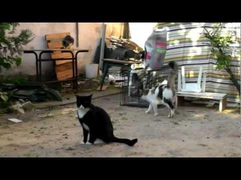 טיפול נכון בחתולים חסרי בית