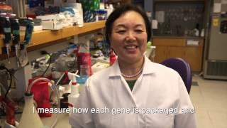 Epigenetics of Lupus
