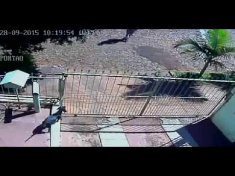Covardia com uma cadelinha no Rio Grande do Sul ajudem a identificar esse agressor