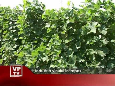 Industria vinului in impas