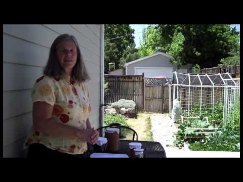 Cool Tomato Plants in Hot Weather with Self-Wicking Pots of Water