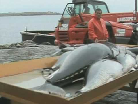 A Ban on Bluefin Tuna?