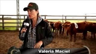 Cavalo, gado e diversão, conheça o Ranch Sorting! Parte 01