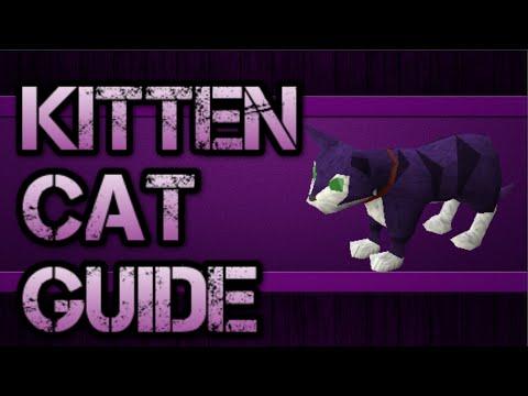 OSRS: Kitten & Cat Guide