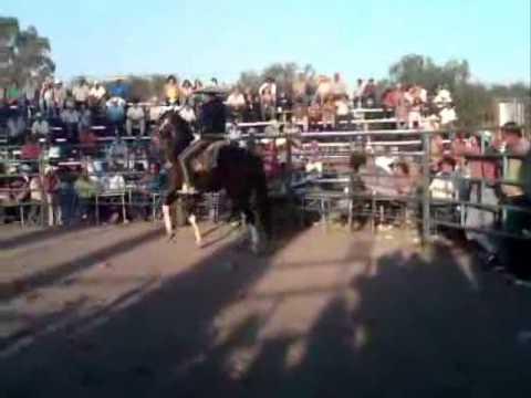 Miguel Angel garcia y sus caballos bailadores en Apaseo