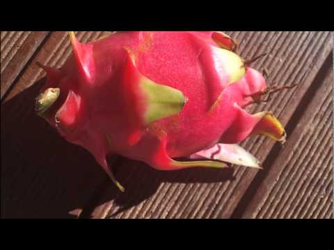 Nutrition - Dragon Fruits - An Amazing fruit with lot of health properties