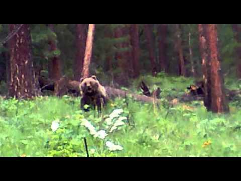 Убили медведя